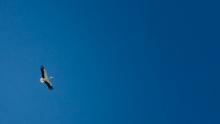 Prises de vue aériennes Air Color SA